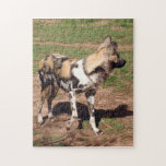african-wild-dog-003 puzzle