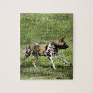 african-wild-dog-004 puzzles