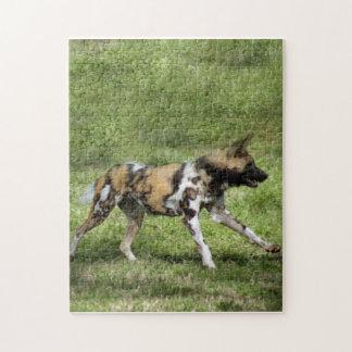 african-wild-dog-004 rompecabeza