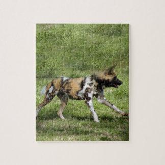 african-wild-dog-004 rompecabezas