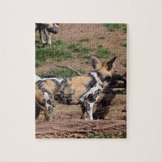 african-wild-dog-007 rompecabezas con fotos