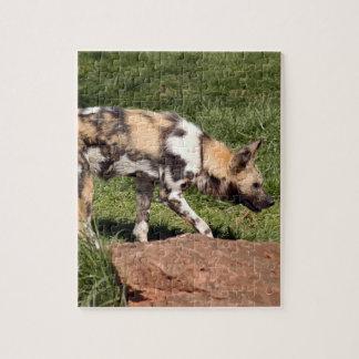 african-wild-dog-010 rompecabeza
