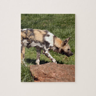 african-wild-dog-010 rompecabezas