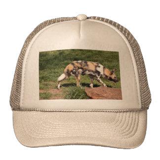african-wild-dog-010 trucker hat