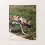 african-wild-dog-011 puzzles
