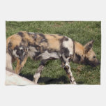 african-wild-dog-011 towels