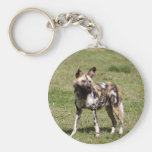 african-wild-dog-014 key chains