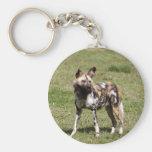 african-wild-dog-014 llavero personalizado