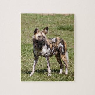 african-wild-dog-014 rompecabeza