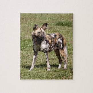 african-wild-dog-015 rompecabezas con fotos