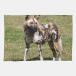 african-wild-dog-015 towels