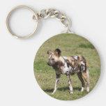 african-wild-dog-016 keychains