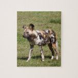 african-wild-dog-016 puzzle