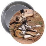 african-wild-dog-018 pinback buttons