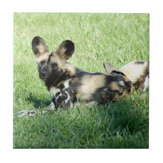 african wild dog_10x10 (2) tiles