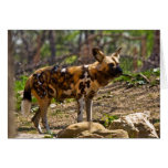 African Wild Dog  1932 Greeting Cards