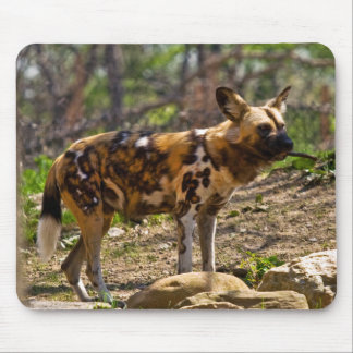 African Wild Dog  1932 Mouse Pad