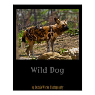 African Wild Dog  1932 Poster