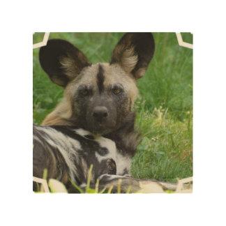 african-wild-dog-3.jpg cuadro de madera