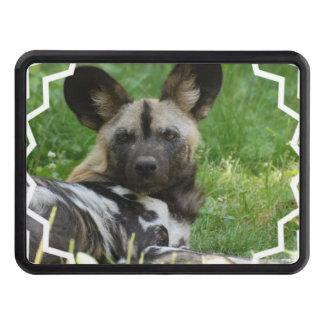 african-wild-dog-3.jpg tapas de remolque