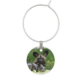 african-wild-dog-4.jpg identificador de copa