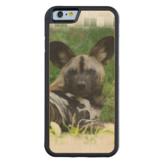 African Wild Dog Carved Maple iPhone 6 Bumper Case