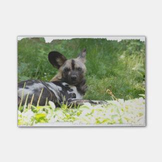 african-wild-dog.jpg nota post-it
