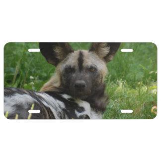 African Wild Dog License Plate