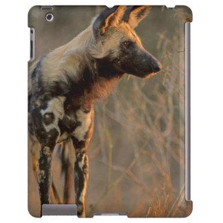 African Wild Dog (Lycaon Pictus), Kruger
