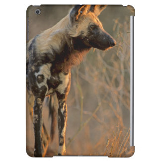 African Wild Dog (Lycaon Pictus), Kruger Cover For iPad Air