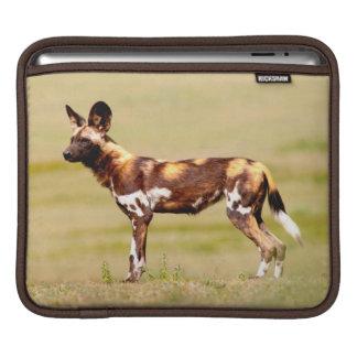 African Wild Dog (Lycaon Pictus) Standing iPad Sleeve