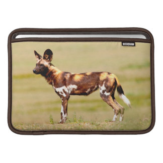 African Wild Dog (Lycaon Pictus) Standing MacBook Air Sleeve