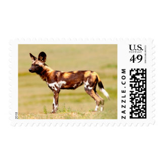 African Wild Dog (Lycaon Pictus) Standing Postage Stamp