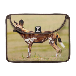 African Wild Dog (Lycaon Pictus) Standing Sleeve For MacBooks