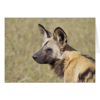 African Wild Dog Portrait Card