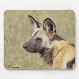 African Wild Dog Portrait Mouse Pad