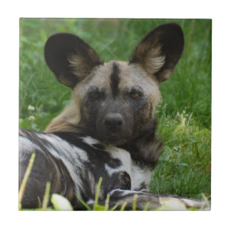 African Wild Dog Tile