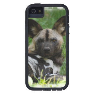 African Wild Dogs Case For iPhone 5