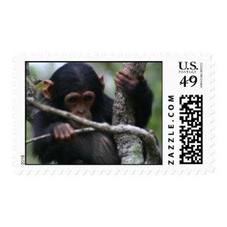 African Wildlife Postage Stamp