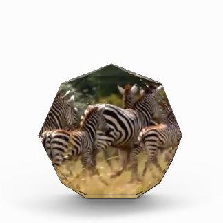 African Zebra Animal print design colors Award
