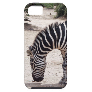 African zebra at the zoo iPhone SE/5/5s case