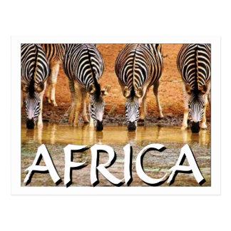 AFRICAN ZEBRA - (Mojisola Onifade) Postcard