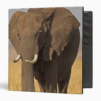 """Africana africano del Loxodonta del elefante de Bu Carpeta 1 1/2"""""""