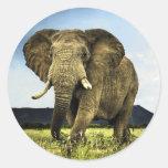africano-elefante pegatinas redondas