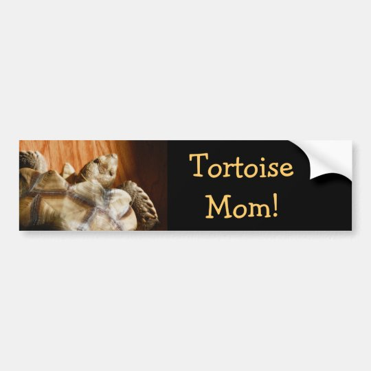 AfricanSpurred Turtle Bumper Stickers! Bumper Sticker