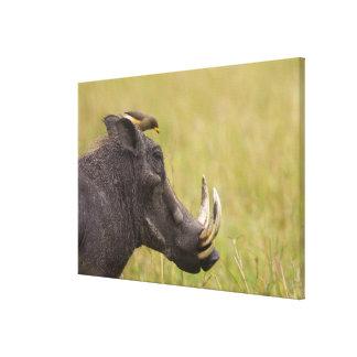 Africanus común del Phacochoerus de Warthog) con Impresión En Lona Estirada