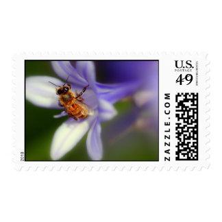 africanus del agapanthus sello postal