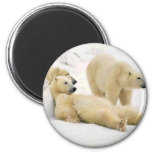 After Dinner Bear 2 Inch Round Magnet
