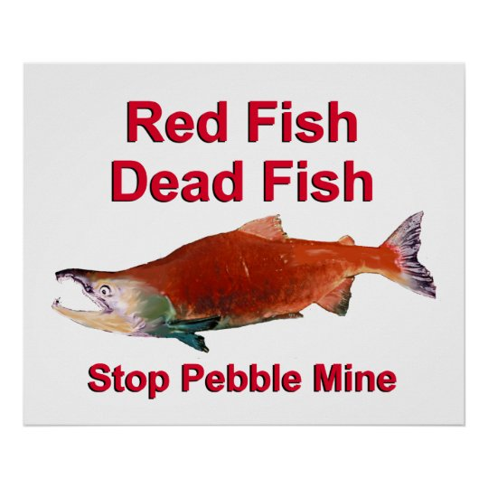 After Salmon - Stop Pebble Mine Poster
