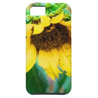 After the Rain iPhone 5 Cases